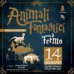 Animali fantastici a Fermo