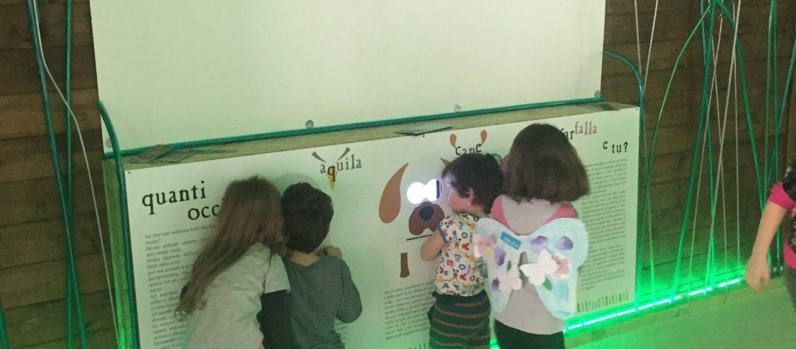 Il Giardino delle Farfalle, Museo