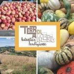 azienda agricola terra di mezzo immagini varie