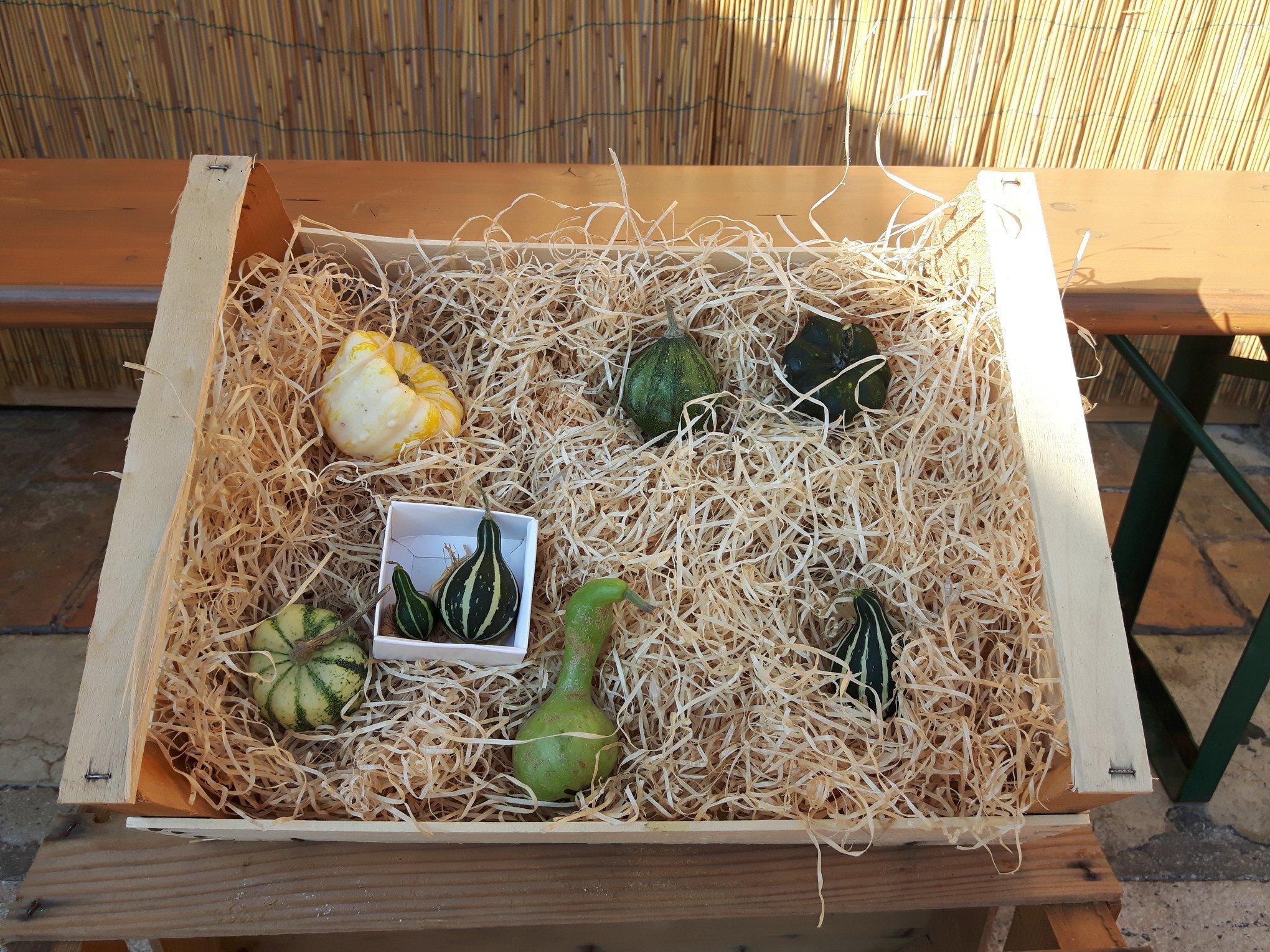 zucche in una cassetta di legno Filottrano