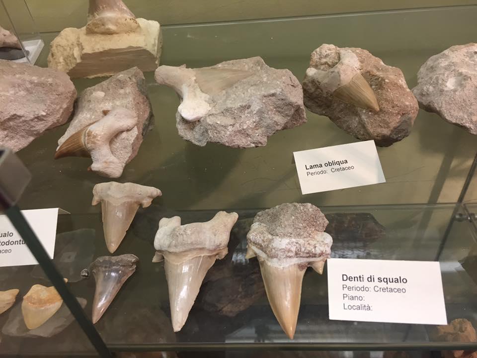 denti squalo fossili