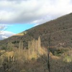 Foresta Umbria crowdfunding