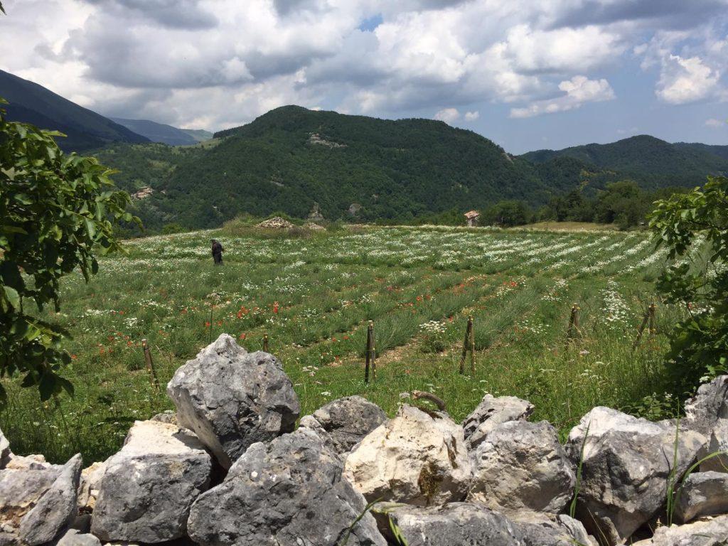 sentiero trekking astorara di montegallo