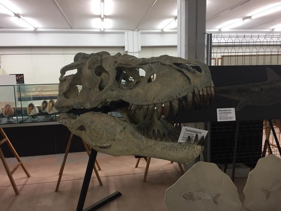 dinosauri cupramarittima malacologia testa
