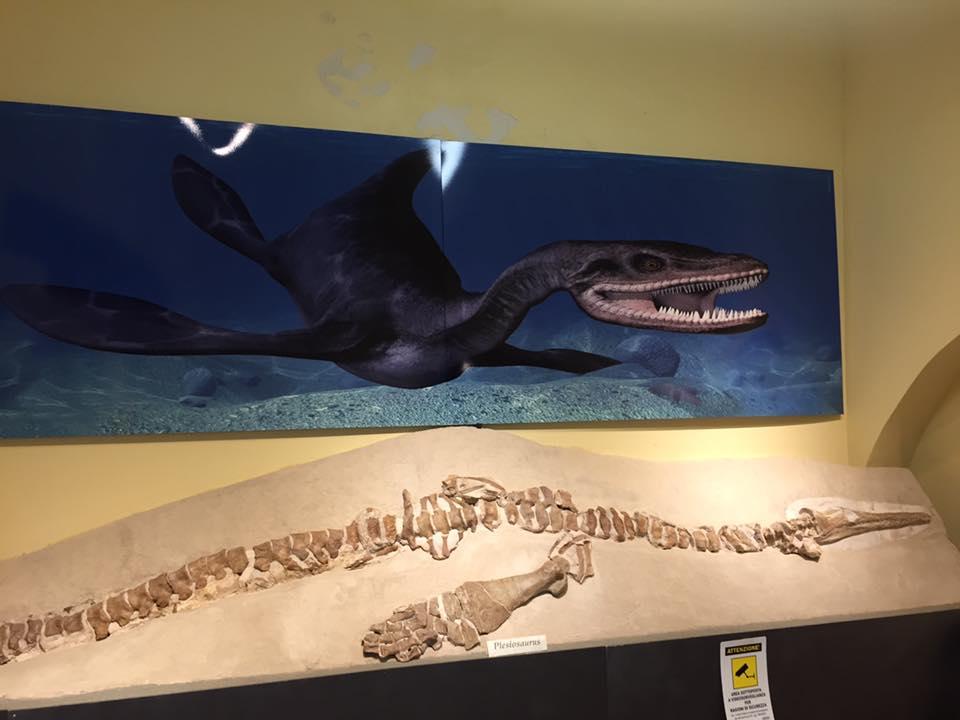 dinosauro marino gagliole scheletro dinosauri